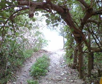 Yabuti07