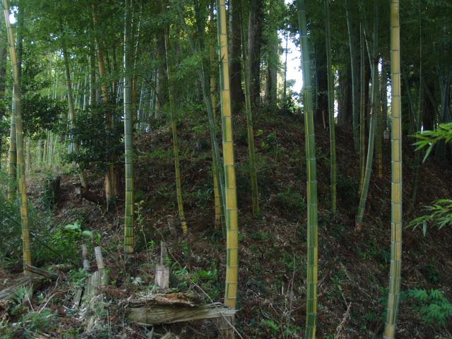 Motosakura3_042