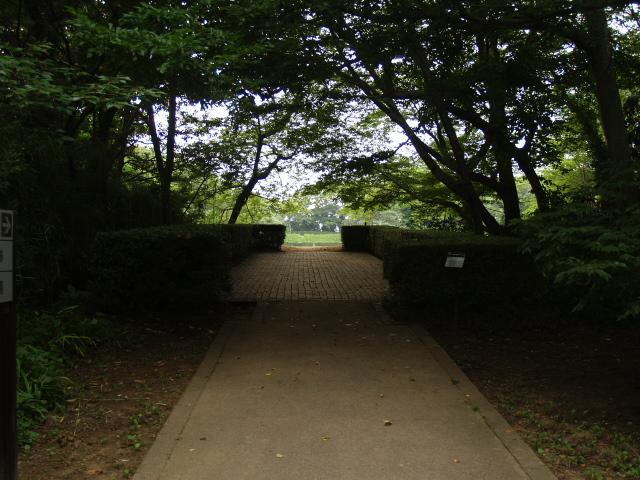 Sakura2_121