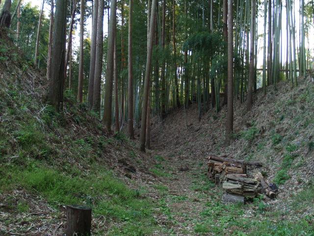 Motosakura3_160