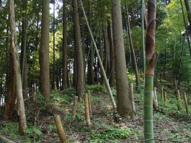 Iwahashi006