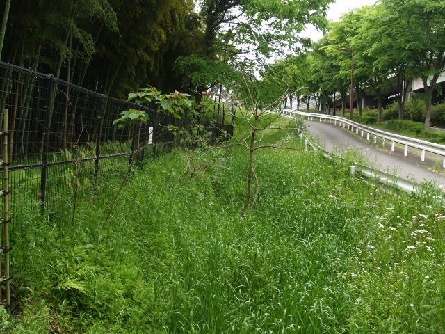 Akayama051
