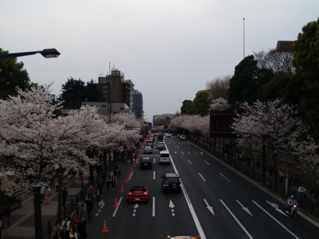Sakura_066