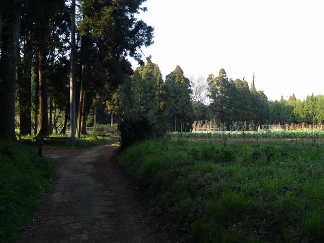 Motosakura3_081