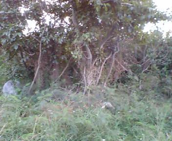Kyann09