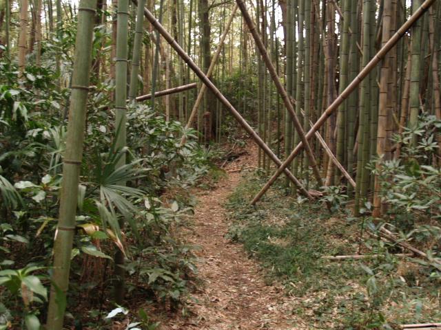 Yonemoto010