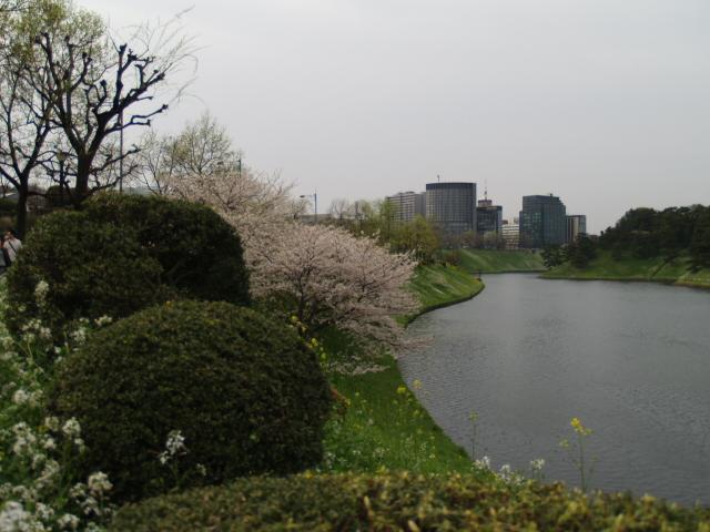 Sakura_017