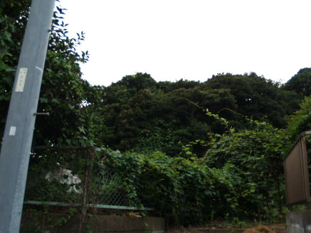 Ichikawa_019