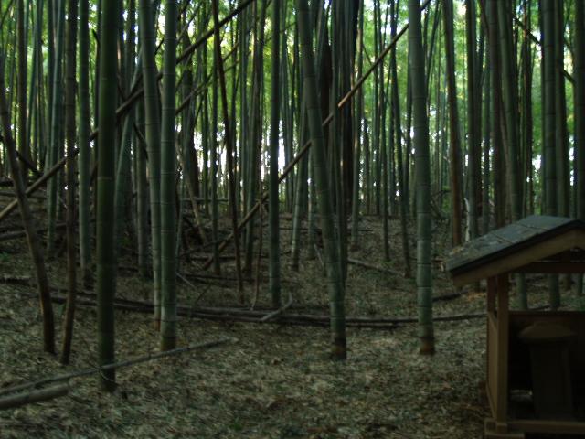 Mawatashioozi012
