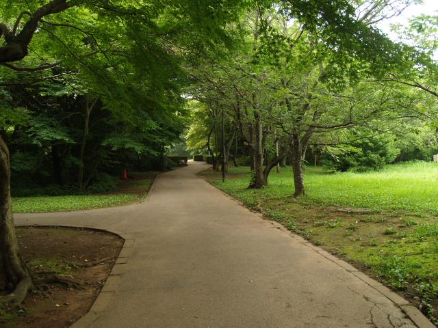 Sakura2_115